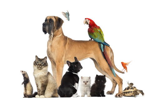 Boarding Dogs Cats Birds Rats Snakes Lizards Westerville Ohio
