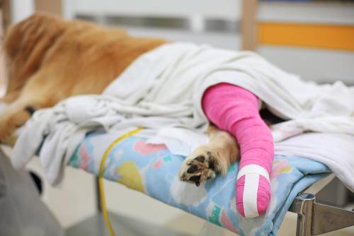 Dog Orthopedic Surgery Westerville Ohio