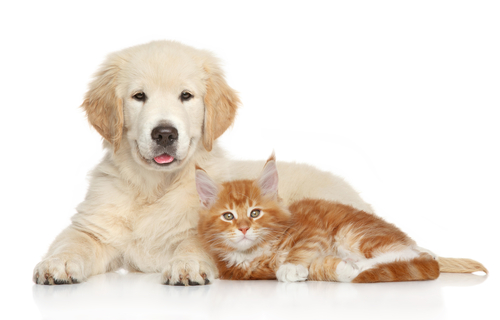 Dog and Cat Breeding and Reproduction Westerville Ohio