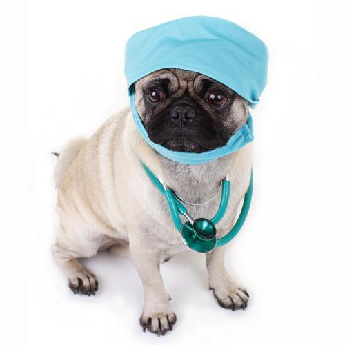 Pet Soft Tissue Surgery Westerville Ohio