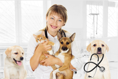 Pet Health Screening Tests Westerville Ohio