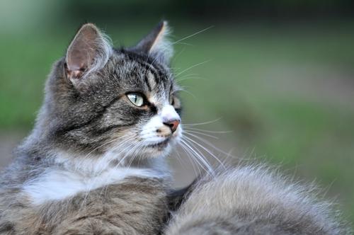 Senior Cat Westerville Ohio